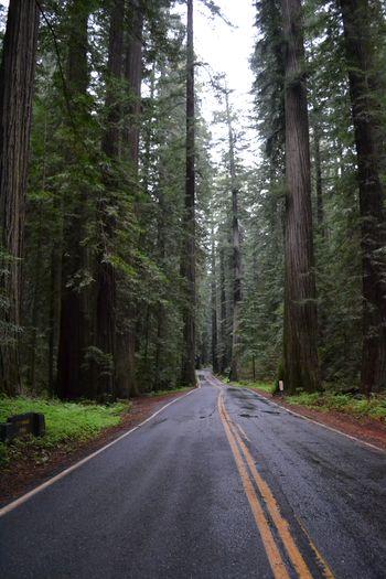 2012-04-20 CA Coast and Redwoods 10