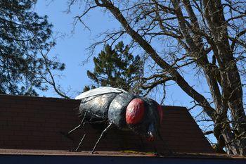 2012-04-20 CA Coast and Redwoods 39