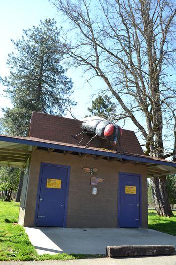 2012-04-20 CA Coast and Redwoods 40