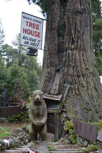 2012-04-20 CA Coast and Redwoods 6