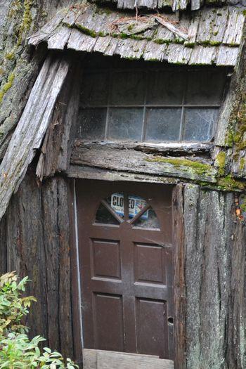 2012-04-20 CA Coast and Redwoods 5